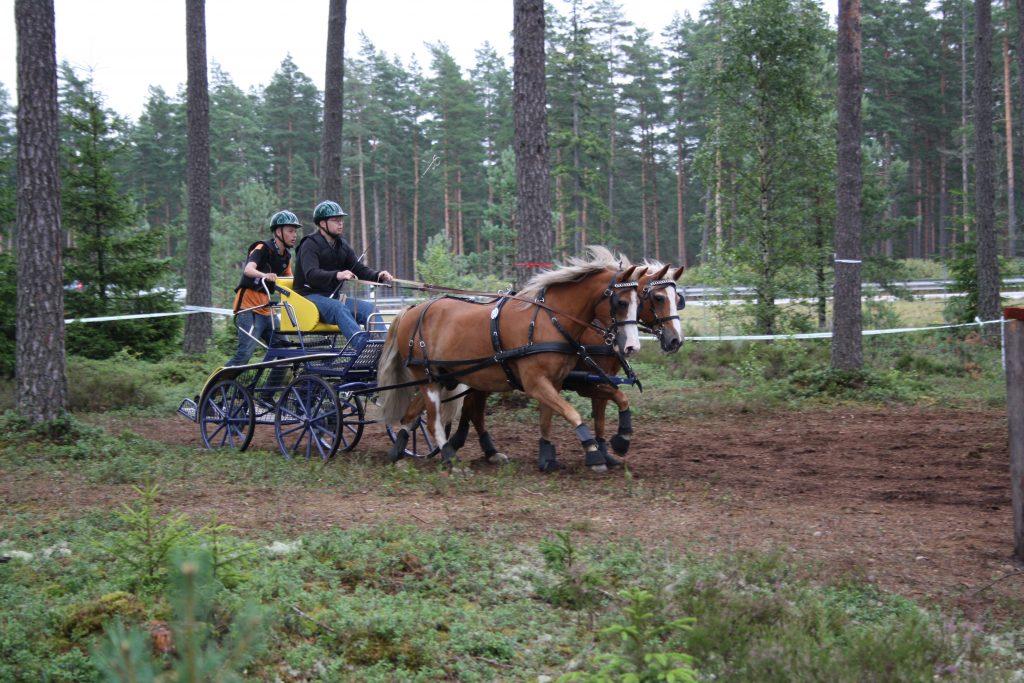 Full fart i skogen